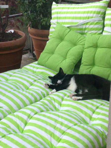Nini, en FA avec Mimi, adore se prélasser au soleil dans le jardin. Etre belle est une occupation à plein temps, et mademoiselle  l'a très bien compris.Heureuse chez sa FA, elle profite des câlins en toute quiétude, accompagnée de sa copine Mimi.