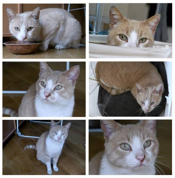 Ninja est un très gentil chat adulte, roux et blanc. Calme, doux, câlin, il est habitué à une vie en appartement ainsi qu'aux enfants. Il n'attend que vous pour connaitre et apprécier une nouvelle vie !