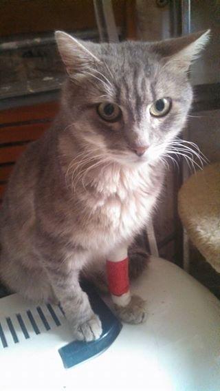 Nisis était âgé de 12 ans. Chat d'une extrême gentillesse, accro aux câlins, avec un regard qui semblait tout comprendre. Lorsque nous l'avons pris en charge, un cancer en phase terminale lui avait été diagnostiqué. Nous avons veillé  sur lui et l'avons accompagné jusqu'à ses derniers instants.. C'était un chat courageux. Sa mort nous a profondément émue et nous ne l'oublierons jamais.