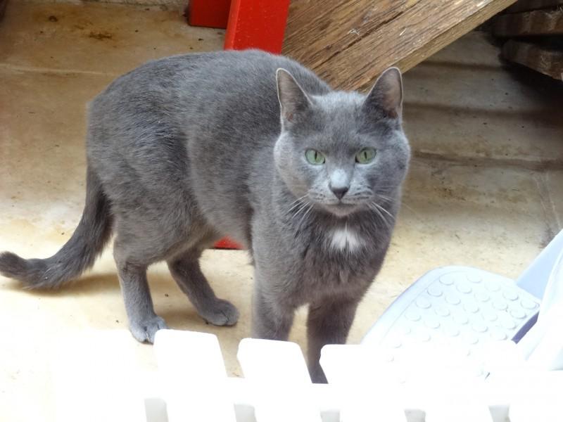 Nouki, venait d'un sauvetage, sur un site de chats errants.Intouchable, ce magnifique chat gris aux yeux percants adorait la cour sécurisée, et observer son monde depuis les hauteurs. Atteint de la maladie de Crohn, il s'est éteint des suites notamment de sa pathologie.Trop affaibli.Il avait une volonté de vivre sans pareille,il s'est battu courageusement et il nous manquera beaucoup.