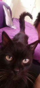 Nouki est âgé d'environ Ç ans. Il a été abandonné par sa famille, dehors, quand il est tombé malade. Après plusieurs mois d'errance, Nouki a posé ses pattounes chez nous. Hospitalisé en urgence, il a du être transfusé. Etant fortement anémié. Depuis, Nouki est un chat bulle. Il va bien, mais son système immunitaire est affaibli. De lourds frais vétérinaires sont engagés depuis sa prise en charge. Nouki cherche donc un parrain ou une marraine, afin de prendre soin de lui. Merci pour ce courageux chat!