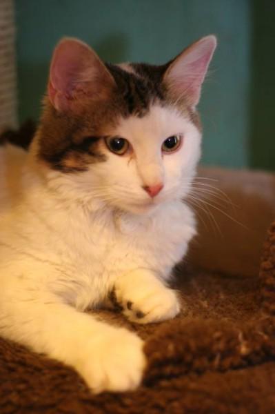 Quand il a été pris en charge à l'association, il se nommait Nuage. Pas très rassuré mais en demande de câlins.  Son passé, sa vie d'avant, tout est terminé ! Adopté, il a recommencé une nouvelle vie et se nomme à présent Hermès.Une famille heureuse, un chat bien dans ses pattounes, choyé et aimé. Que du bonheur ! Découvrez en photos le avant/après de sa nouvelle vie ....