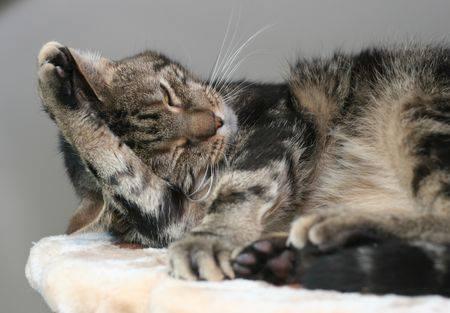 Oliver est âgé de 5 ans. C'est un chat discret mais qui s'épanouira pleinement au sein d'un foyer attentionné et aimant.Calme, câlin et d'une grande douceur : un très gentil chat.