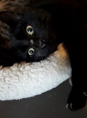 Orpi est un jeune adulte, sociable et habitué à vivre en appartement. Il aura simplement besoin d'un peu de temps avant d'être à l'aise. Il vous attend à l'adoption sur Paris.