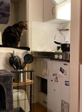 Petula surveille la cuisson des pâtes mais ce qu'elle adore le plus ce sont moments de câlins  Merci Sauve de m'avoir donner la chance d'apporter plein d'amour à ce petit chat.