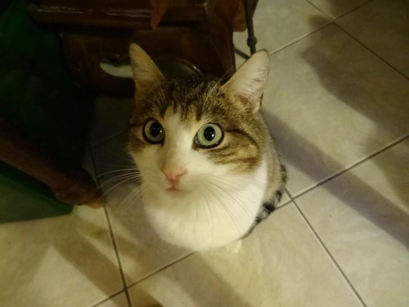 Petite puce:1an, douce, très câline, aux yeux soulignés de noirs a été sortie de la fourrière in extremis.Adoptée,elle est choyée,heureuse et vit au sein d'un foyer aimant.