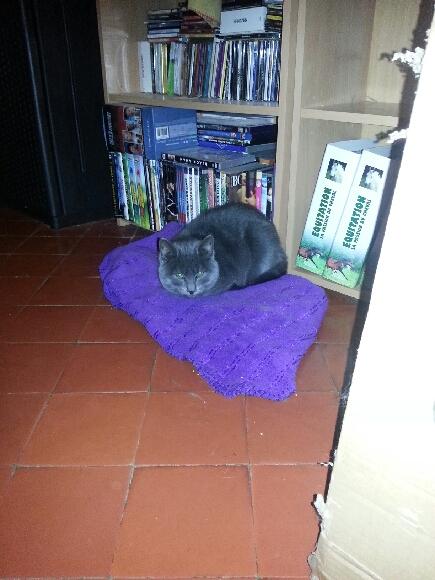 Figaro est un jeune chaton gris âgé de 6 mois. Câlin et très beau, il attend sa famille.