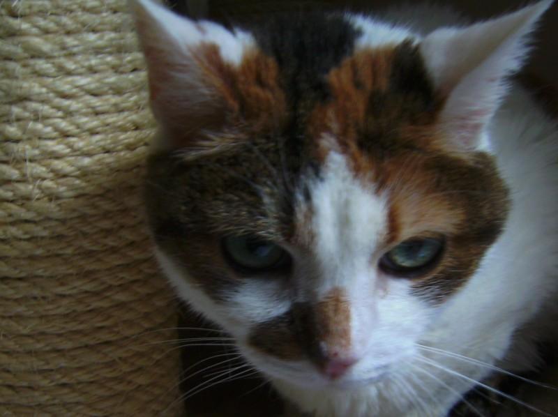 Canaille est âgée de 14 ans. Trouvée seule et mal en point dehors, au beau milieu d'un rond point, complètement perdue.Elle a été amenée à la fourrière, et nous sommes intervenus.Prise en charge, il a été découvert une tumeur importante à la hanche. Elle est médicalisée, et bénéficie d'une alimentation particulière au quotidien ainsi qu'un suivi vétérinaire régulier. Très câline, d'une grande douceur et dotée d'un courage sans faille : elle force l'admiration. Elle profite enfin de soins, d'amour et d'une retraite paisible.Son petit nom lui va comme un gant car toute mamie qu'elle soit .... elle a un sacré petit caractère ! Une adorable petite canaille .