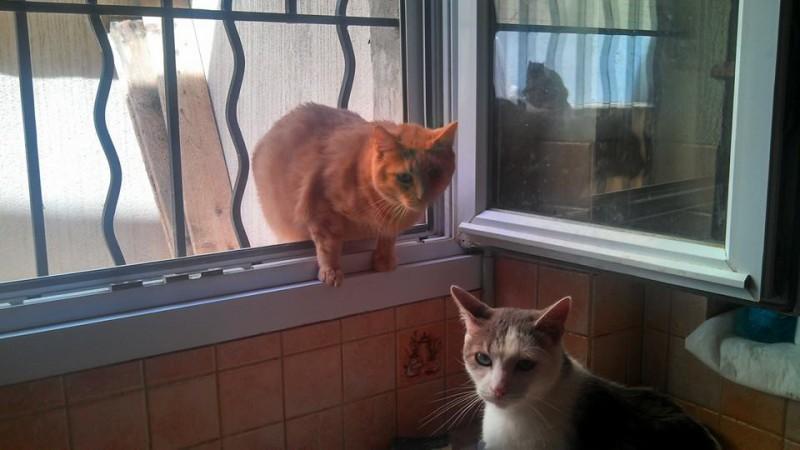 Pikachu a été sauvé de maltraitance, avec sa soeur Titoune. Marqué à vie, il a toujours refusé qu'on le touche à nouveau.Il aura connu quelques années de paix à l'association, avec ses copains chats.