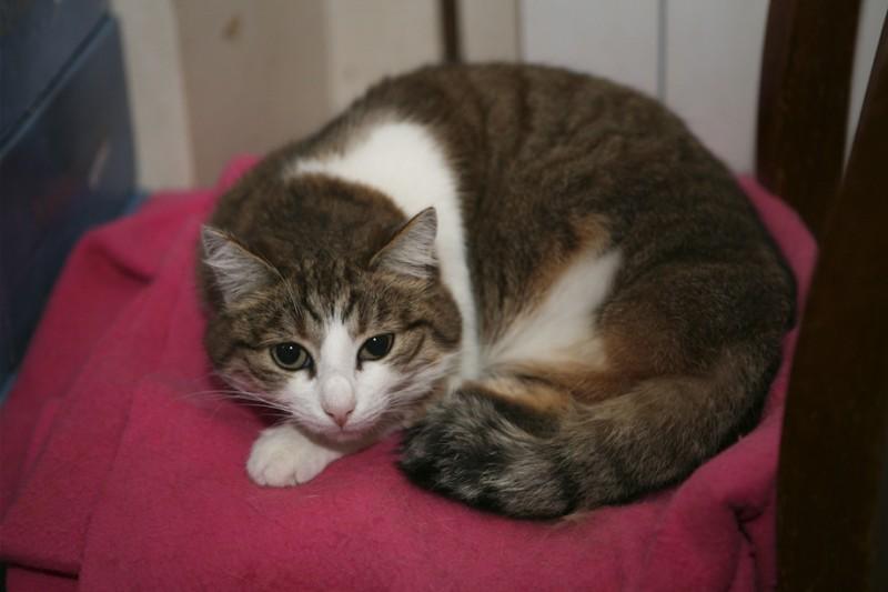 Polly est une petite chatte très sauvage qui vient du sauvetage de Villejuif où l'on torturait des chats. Elle en a vu des choses… si vous saviez… Après avoir été abandonnée dehors comme une moins que rien, elle ne s'est plus laissée approcher.