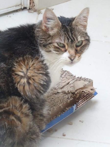 Mamoune est âgée de plus de 15 ans. Cette mamie chat fait fondre le coeur de tous ceux qui la connaissent. Mamoune est très gentille, douce, et adore les câlins. Elle s'entend très bien avec les autres chats, et fait tranquillement sa petite vie. Profitant d'une retraite paisible. Malgré son grand âge, Mamoune avait été abandonnée en fourrière. Ici, elle a enfin trouvée sa famille.
