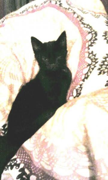 Arrivé chaton avec ses frères et soeurs (4), l'été dernier, cette belle panthère noire a eu la chance d'être adopté avec sa soeur où ils vivent depuis heureux au sein de leur famille.