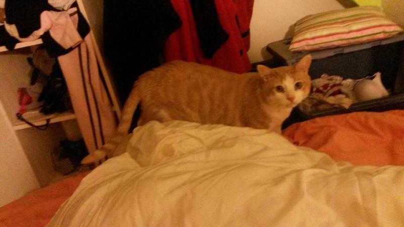 Rouky est un chat voyageur. Trouvé dehors mal en point et très maigre, il s'est refait une santé dans le sud de la France,avant de venir nous rejoindre sur Paris.  Adopté depuis, il est choyé et heureux dans sa famille. Rouky aime les livres, le panier à linge et s'est même trouvé une cachette dans la chambre. Il profite d'une vie rêvée et surtout .... vraiment bien méritée !