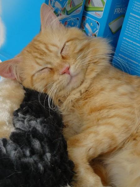 Snoopy est âgé d'un an. Ce beau chat angora roux est calme, curieux et de nature paisible. Il adore les câlins et observer ce que vous faites. Facile à vivre, il sera d'une présence aimante.