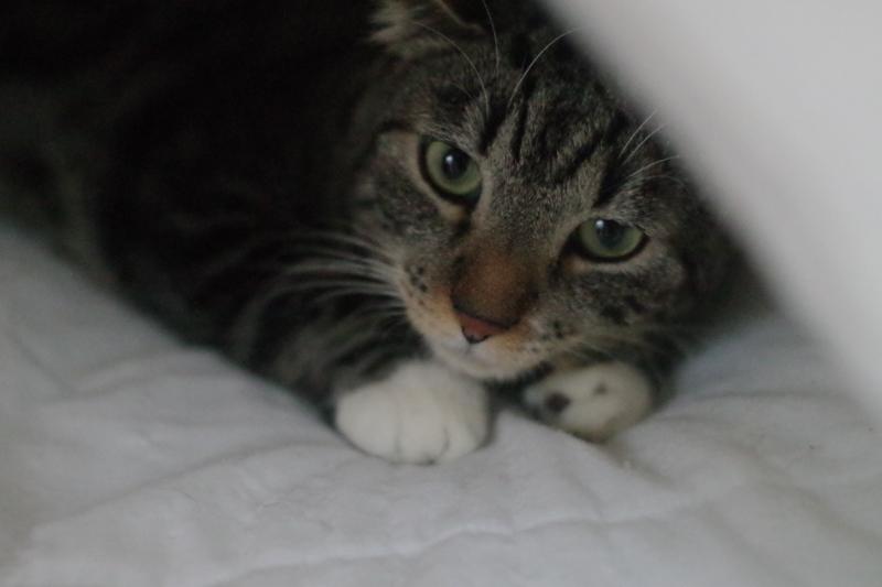 Spirou est beau et il le sait.Il adore se cacher sous la couette,les câlins,grogner mais surtout il aime plus que tout Marie-Claude.Très attachant, il s'est parfaitement intégré aux autres protégés de Sauve.