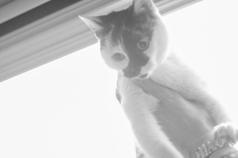Stella est une toute jeune chatonne qui a encore besoin de présence et d'attention.