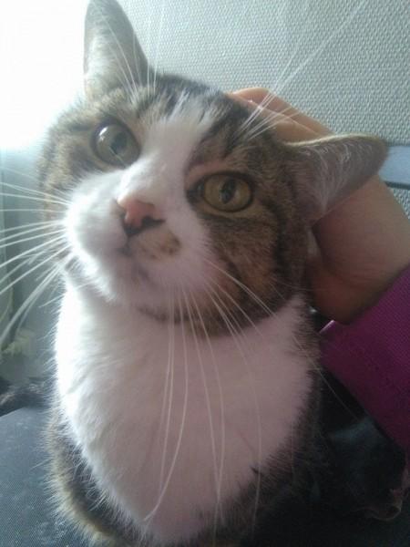 Suzy est âgée de 4/5 ans. Elle vient s'allonger sur les genoux de sa famille d'accueil, et demande beaucoup de caresses. Elle aime beaucoup