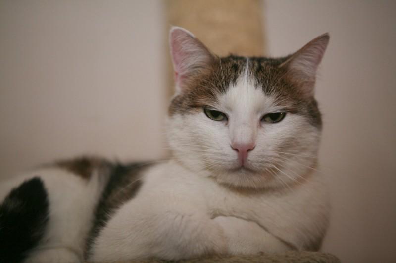 Tic et Tac sont 2 très gentils chats. Ces 2 frères blancs avec des taches se ressemblent beaucoup tant physiquement que dans leurs caractères et leurs miaulements. Ils faisaient partis d'une portée de chatons qui avaient été noyés dans un sac. Eux, ont survécus et sont arrivés chez Sauve.