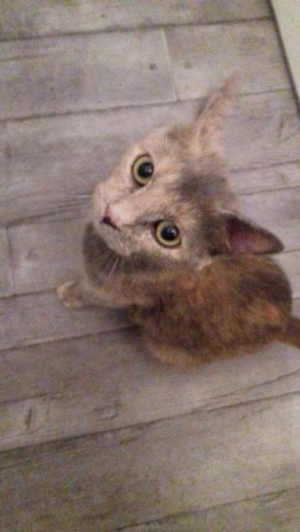 Tendresse, 1 an environ, porte très bien son nom. Elle adore les câlins! Une fois à l'aise, elle deviendra vite complice à vos côtés.