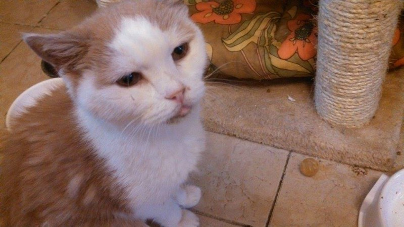 Tigrou est un sénior, âgé d'une dizaine d'années. Accro à la pâtée, il est présent et câlin. Il suit les bénévoles comme leur ombre et réclame sa petite part d'attention, en venant doucement se frotter contre vous. Un papy chat au regard tout noir.