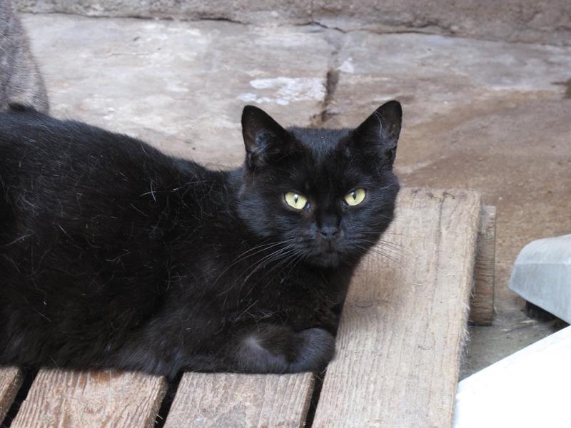 Tim est la sœur de Tom et vient comme lui du sauvetage de Rambouillet. Comme la plupart des chats issus de ce sauvetage, elle a beaucoup souffert de grande négligeance et de malnutrition, ce qui a sans doute fortement réduit son espérance de vie.