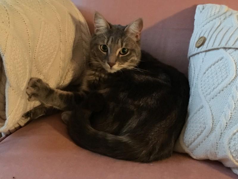 Timeon est un jeune adulte âgé de 11 mois. C'est un amour de chat très sociable, câlin et affectueux.  Facile à vivre et à l'aise, il vous comblera de bonheur;  Il vous attend à l'adoption sur Paris!