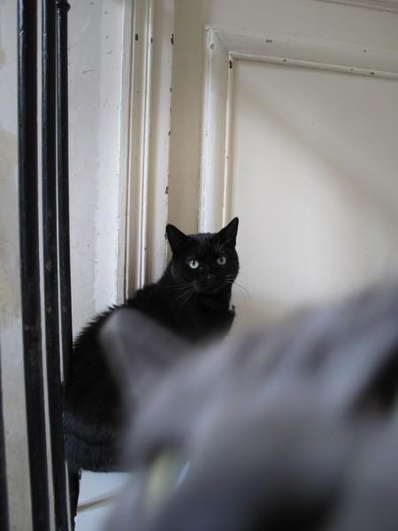 Tinette est arrivée il y a une douzaine d'années à l'association après le décès de sa protectrice indépendante qui avait 160 chats.