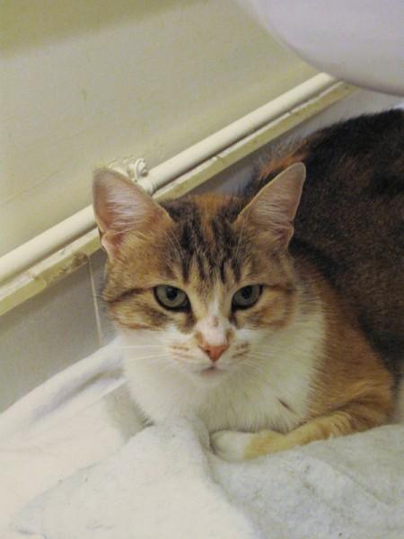 Cette jeune chatte est arrivée à l'association avec ses chatons. Ses petits sevrés, elle peut désormais rejoindre son nouveau foyer.
