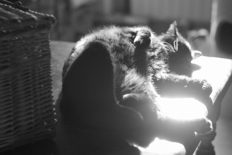 Velours porte bien son nom, très doux ce chat noir est facilement reconnaissable grâce à ses moustaches blanches