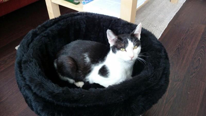 Zen est un chat gentil, calme, câlin et habitué à une vie en appartement.Il a beaucoup d'amour à donner!Il saura s'adapter et être à l'aise même dans un petit espace.