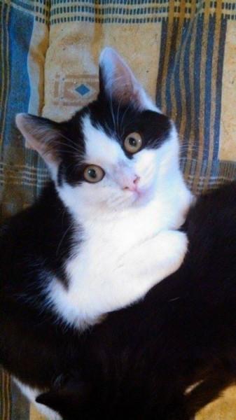 Ziggy a été adopté avec son copain Pixel. Joueur et câlin, il a enfn la chance de s'épanouir et surtout grandir dans un foyer !